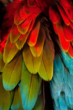 """ Macaw #5 "" -  Signed limited edition fine art print"