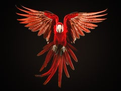 """ Macaw #7 "" -  Signed limited edition fine art print"