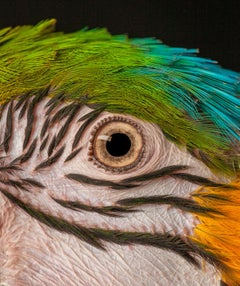 """ Macaw #9 "" -  Signed limited edition fine art print"