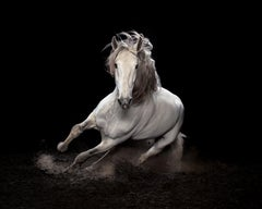 """""""Ehpico d' Atela"""" pure bred Lusitano stallion #1 - Signed limited edition print"""