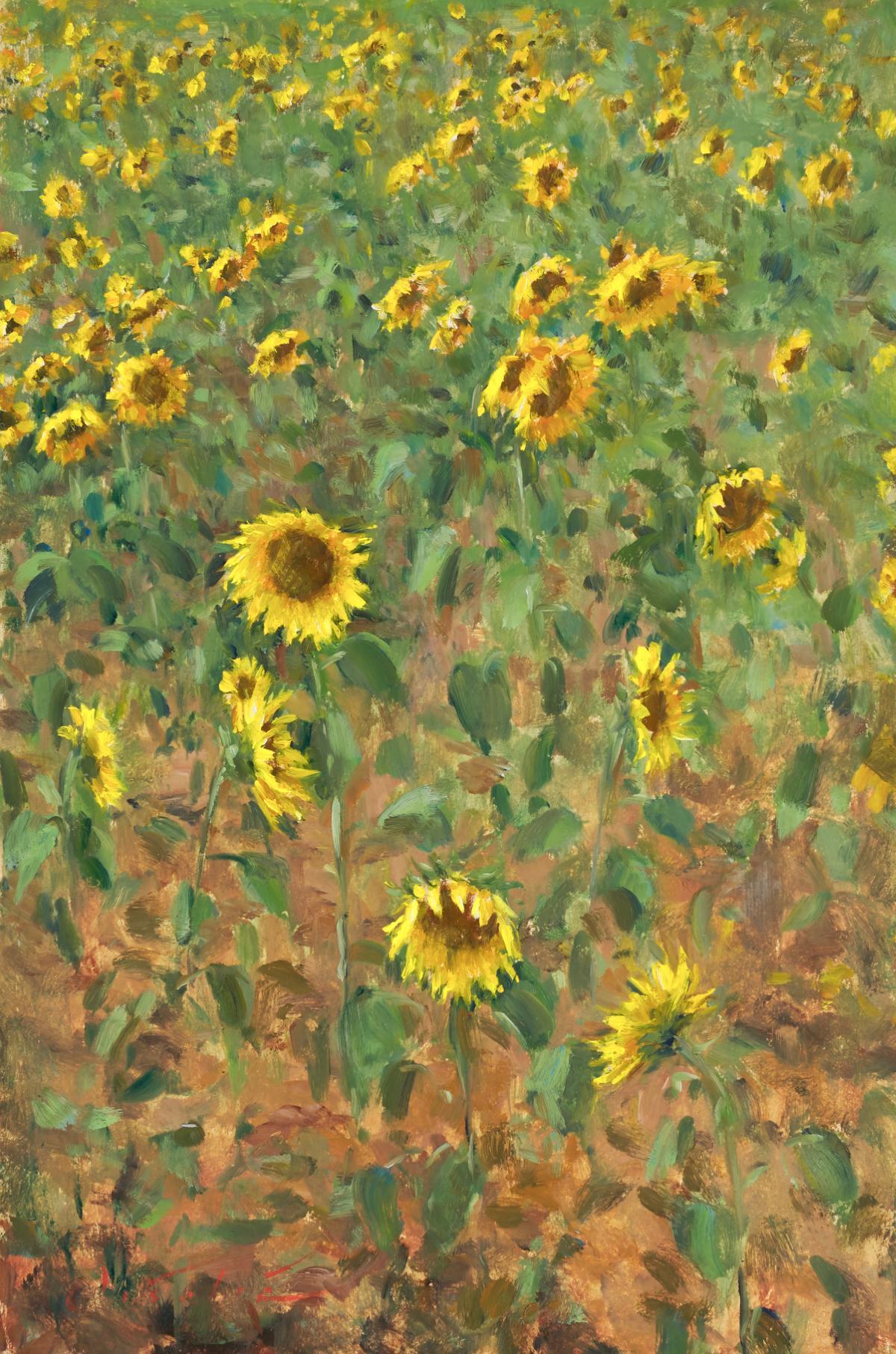 Sunflowers, Gers