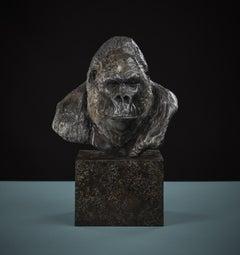 'Nico Jnr' Contemporary Bronze Sculpture of a Gorilla on a bronze plinth