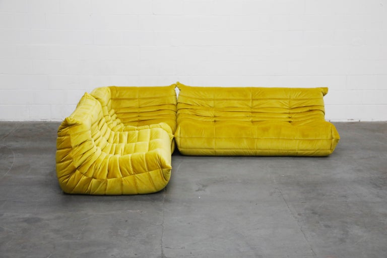 This incredible three (3) piece Togo sectional living room set, was designed by Michel Ducaroy in 1973 for Ligne Roset, France. This set was completely restored with new high grade velvet upholstery in a mesmerizing golden chartreuse color, and