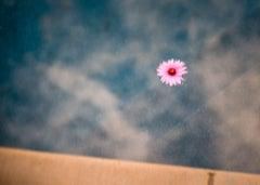 Floating Pink Petals, 2