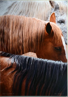 Triple Crown Dreamers (3) (horses, photograph, animals)