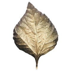 Tommaso Barbi Huge Rhaburb Leaf Brass Wall Light or Sconce