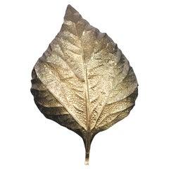 Tommaso Barbi Huge Rhaburb Leaf Brass Wall Light or Sconce