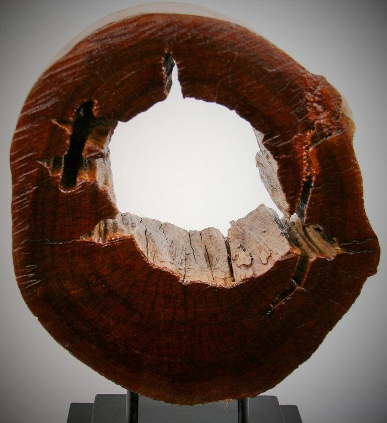 Hardwood Tree Segment Wood Sculpture For Sale