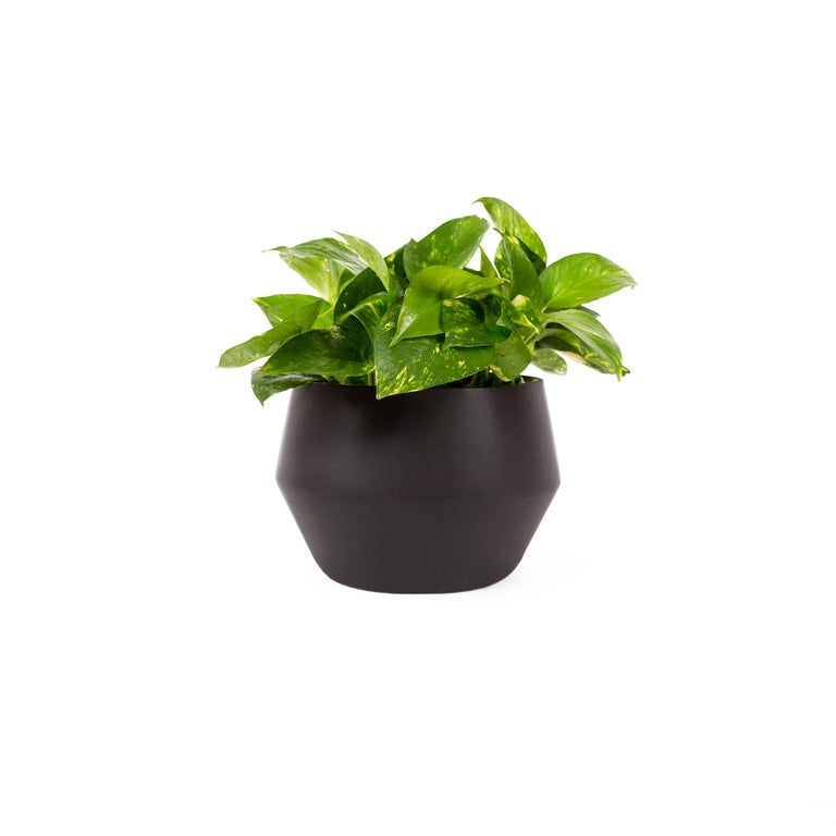 This diamond shaped planter come in 2 different colors (black and terracotta) and can be used in 3 different ways, as a stand, on top of a counter or table, and suspended by a cotton chord. The use depends on how the user interacts with the space