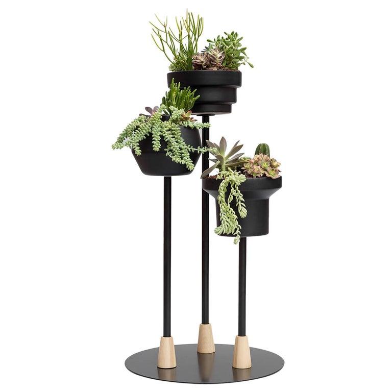 Trinum Pedestal Multi Planter, Contemporary Mexican Design For Sale