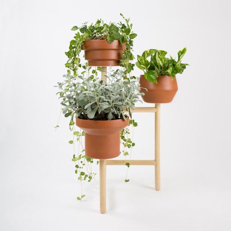 Other Trinum Plant Pot Set with Oak Base For Sale
