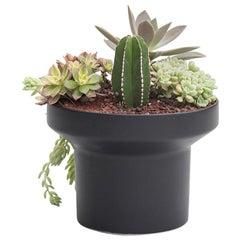 Trinum Tube Ceramic Planter, Contemporary Mexican Design