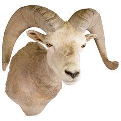 Trophy Desert Ram Mount