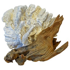 Tropical Natural White Blade Coral and Driftwood Sculpture