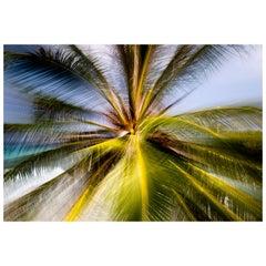 """Tropical"" Photography, 2019 by Brazilian Photographer Chico Kfouri"