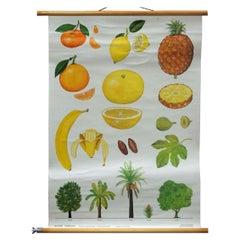 Tropical Subtropical Fruits Vintage Poster Rollable Wallchart