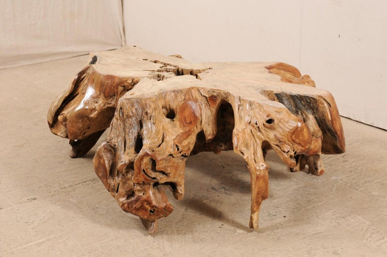 A natural teak tree root coffee table. This wooden coffee table has been fashioned from a large cut section of old teak stump, whose intertwining roots which gives it an organic and airy feel. There is a nice contrast of colors and wonderful showing
