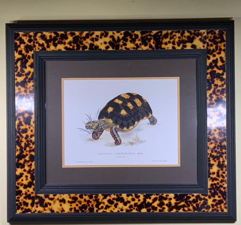 Turtle Shell Lucite Faux Framed Turtle Print For Sale 5