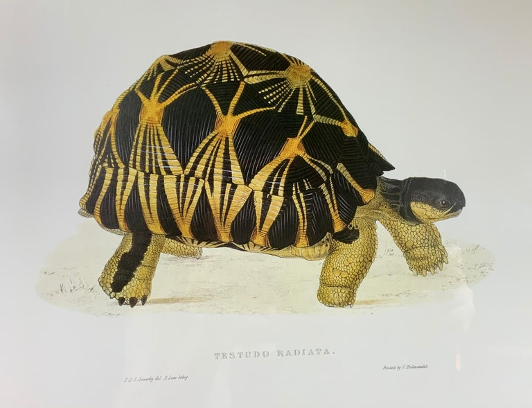 Turtle Shell Lucite Faux Framed Turtle Print For Sale 6