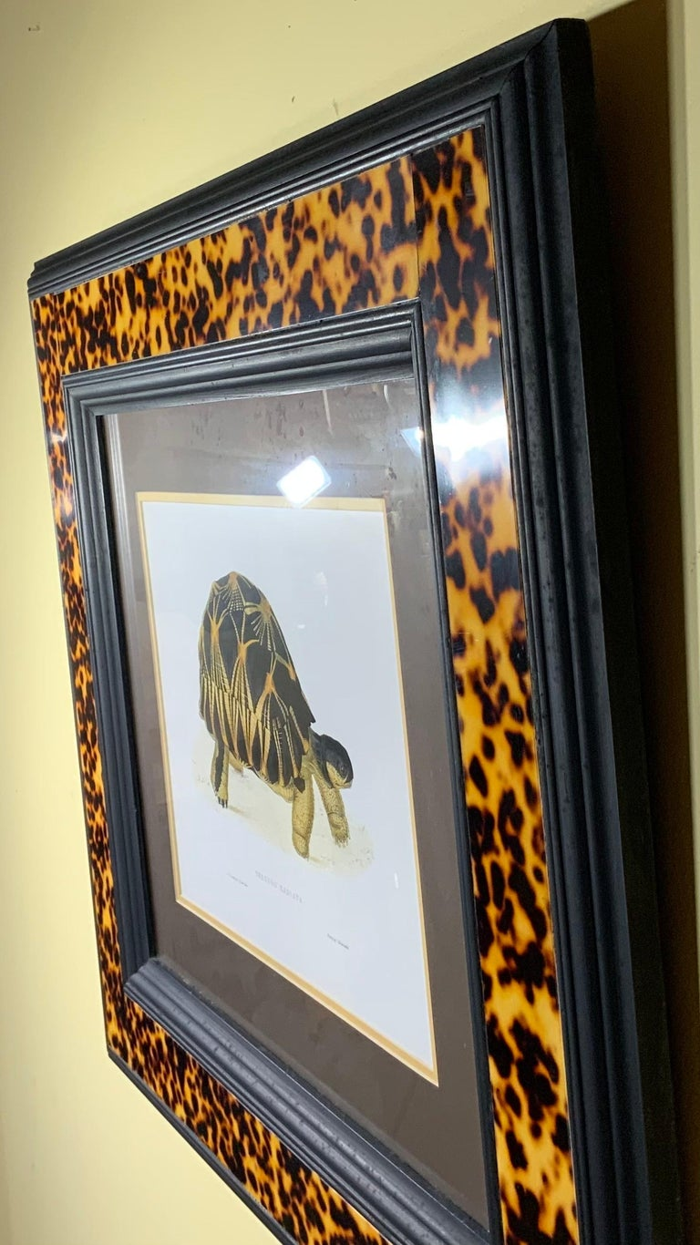 Turtle Shell Lucite Faux Framed Turtle Print For Sale 7