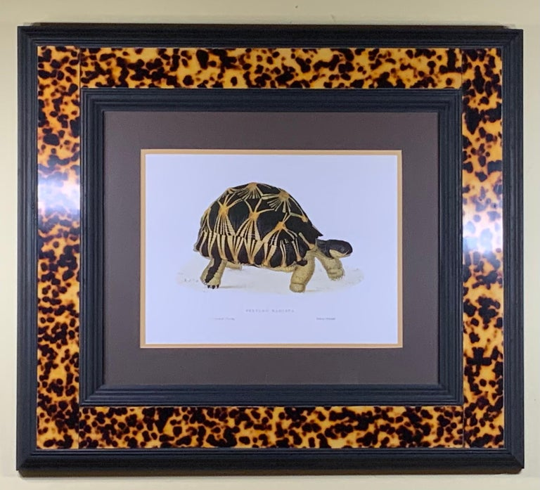 Turtle Shell Lucite Faux Framed Turtle Print For Sale 8