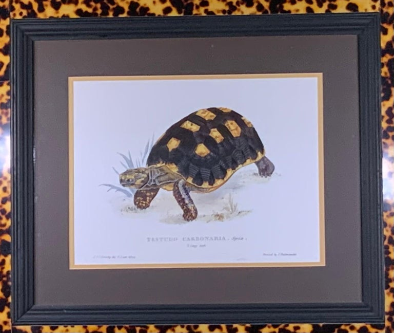 Beautiful turtle print framed with decorative double wood frame and turtle shell Lucite faux border. Commissioned by designer John Richard.