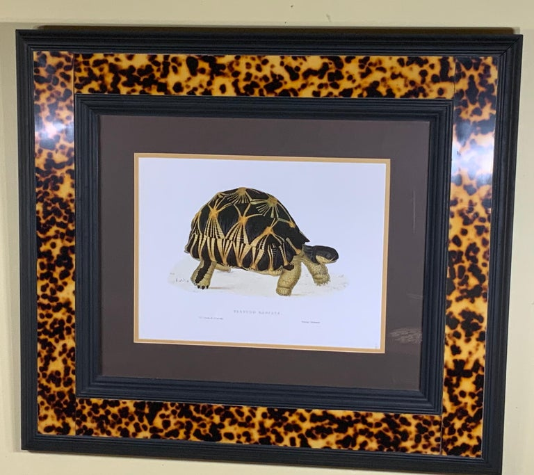 American Turtle Shell Lucite Faux Framed Turtle Print For Sale