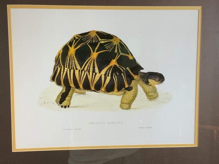 Turtle Shell Lucite Faux Framed Turtle Print In Good Condition For Sale In Delray Beach, FL
