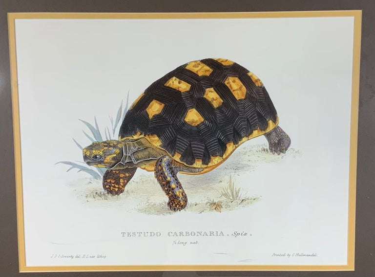 20th Century Turtle Shell Lucite Faux Framed Turtle Print For Sale