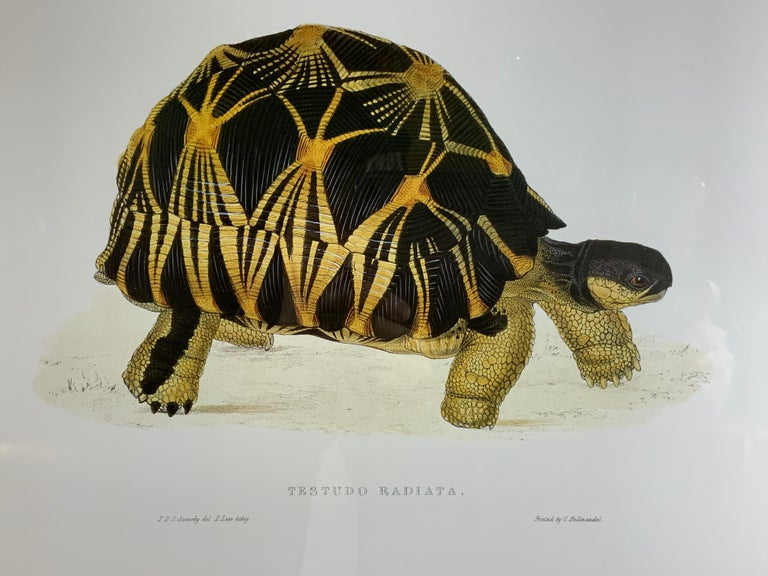 Turtle Shell Lucite Faux Framed Turtle Print For Sale 3