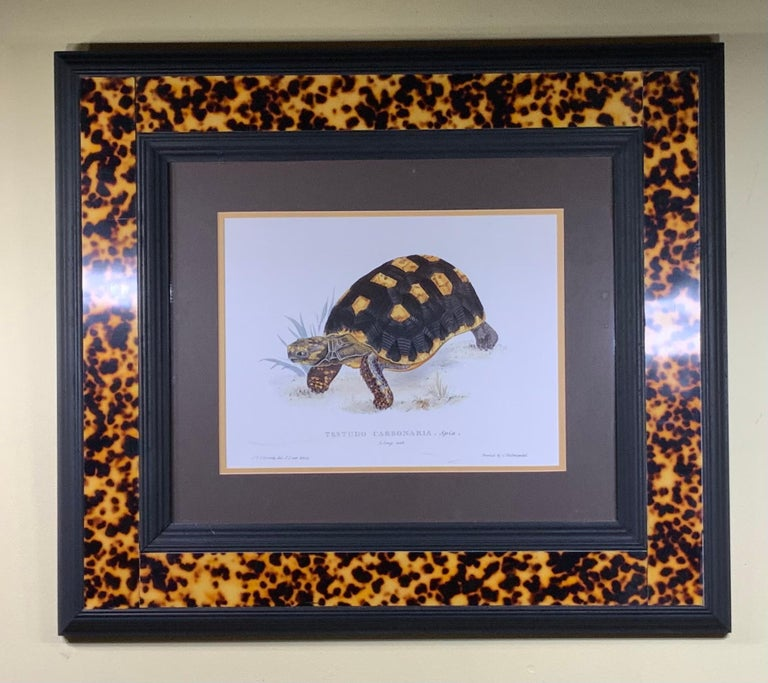 Turtle Shell Lucite Faux Framed Turtle Print For Sale 4