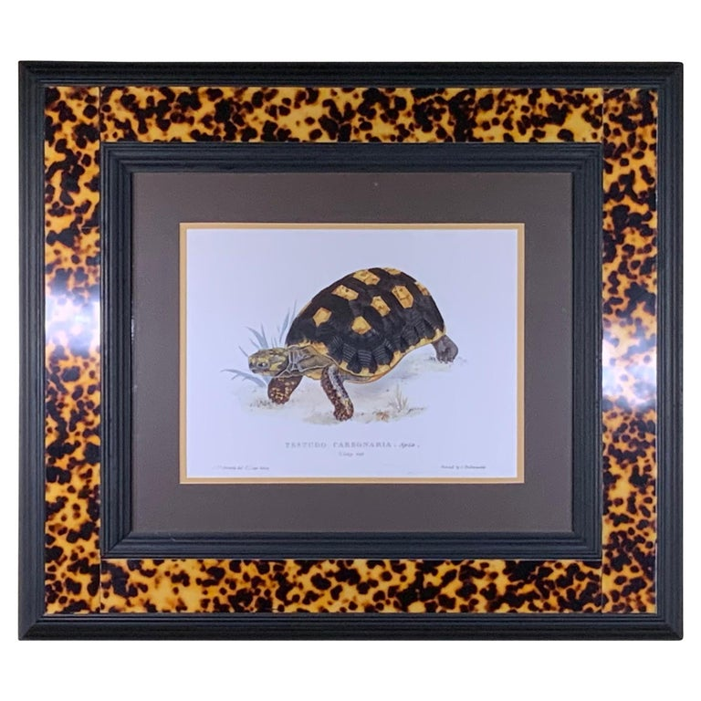Turtle Shell Lucite Faux Framed Turtle Print For Sale