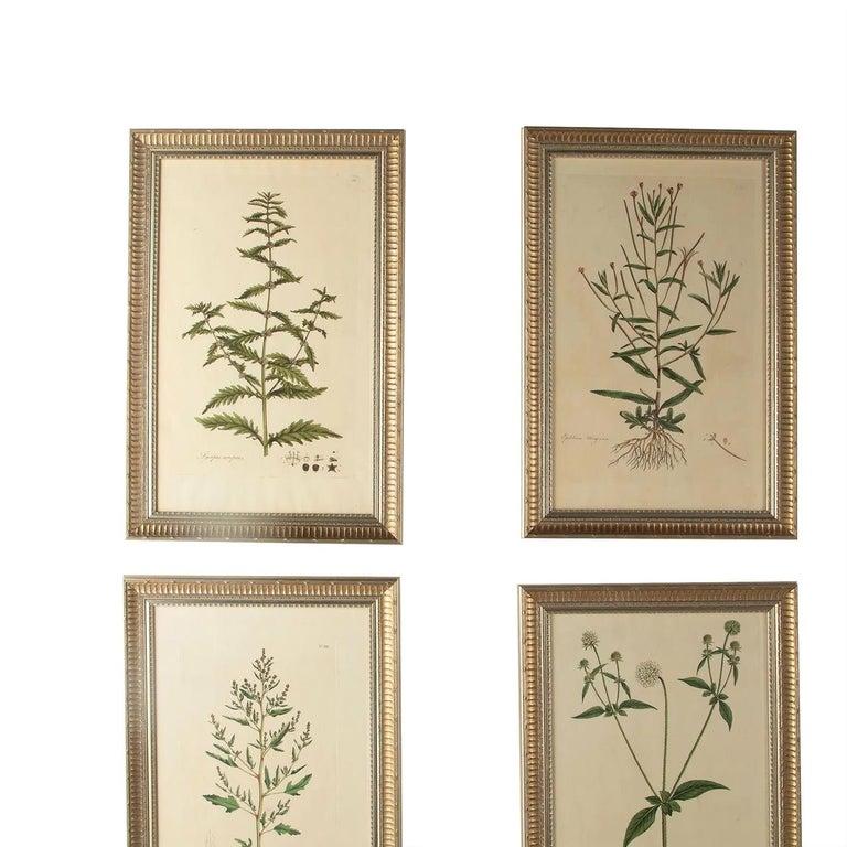 English Twelve 18th Century Botanical Engravings by Curtis