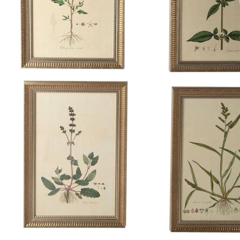Twelve 18th Century Botanical Engravings by Curtis In Good Condition In Tetbury, Gloucestershire