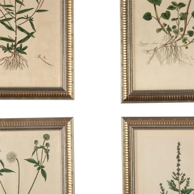 18th Century and Earlier Twelve 18th Century Botanical Engravings by Curtis