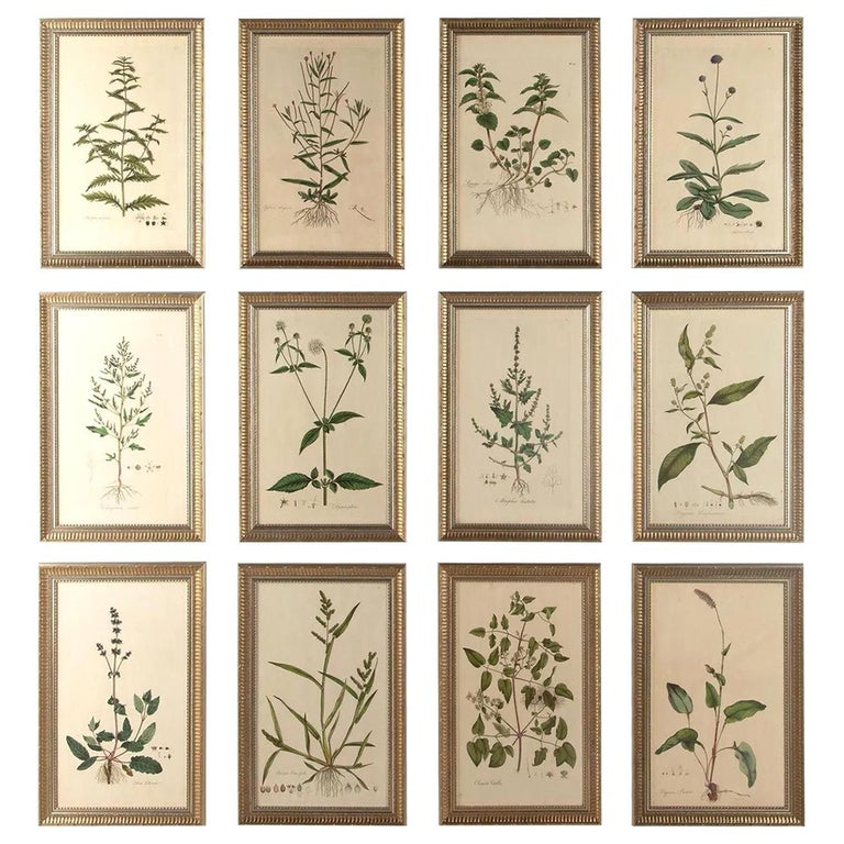 Twelve 18th Century Botanical Engravings by Curtis
