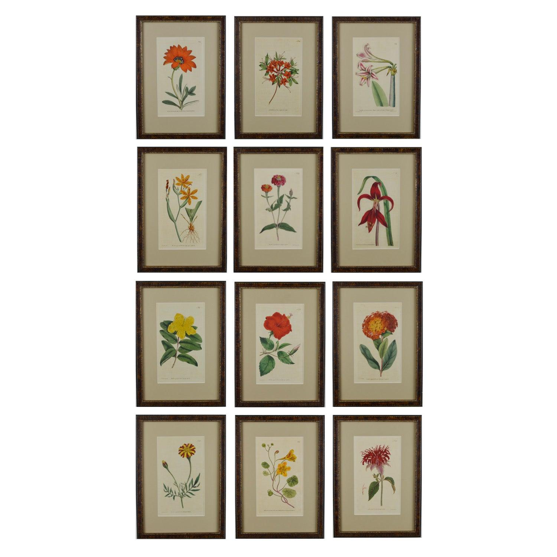 Twelve 19th Century Hand Colored Curtis Botanical Prints by Sydenham Edwards