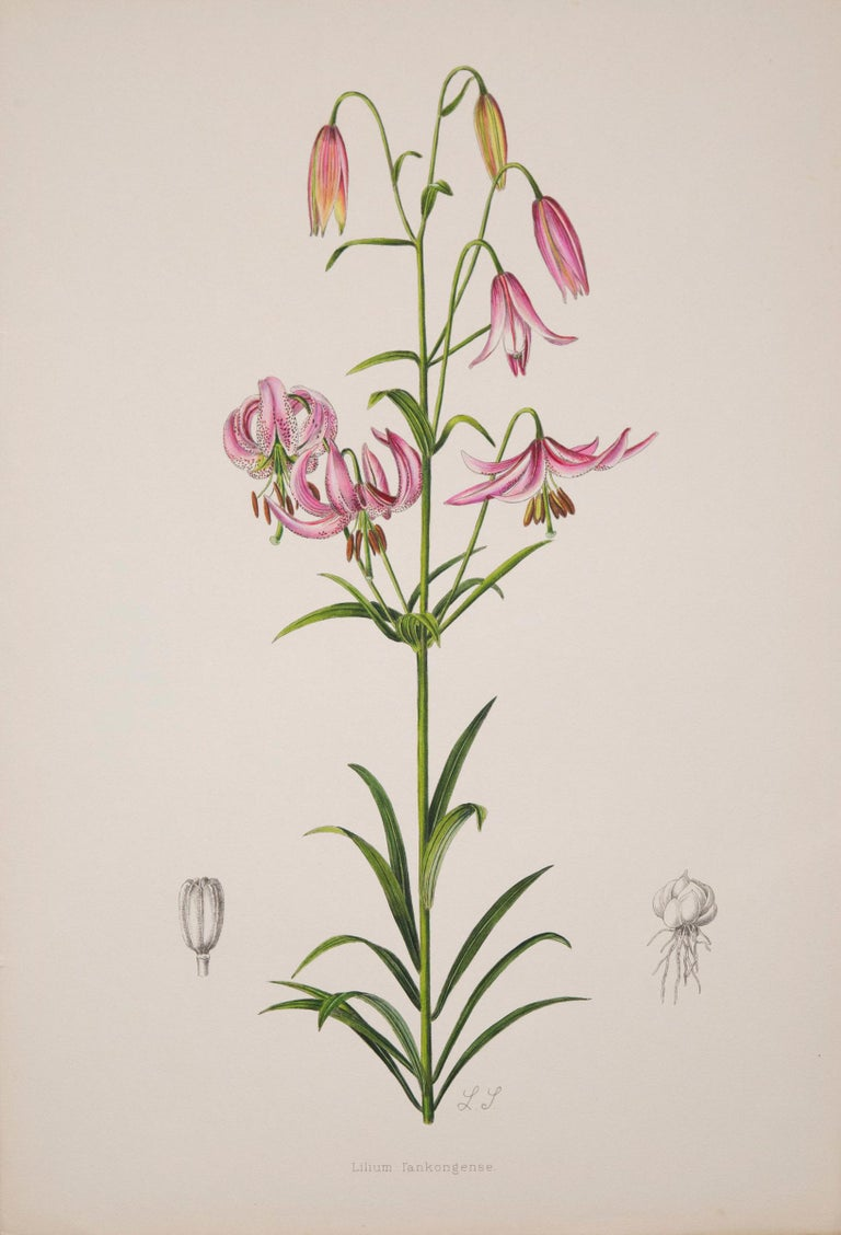 Twelve Large Antique Flower Prints, J.H. Elwes, 1877 For Sale 2
