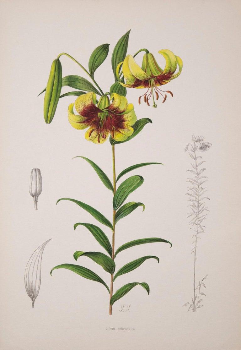 Twelve Large Antique Flower Prints, J.H. Elwes, 1877 For Sale 3