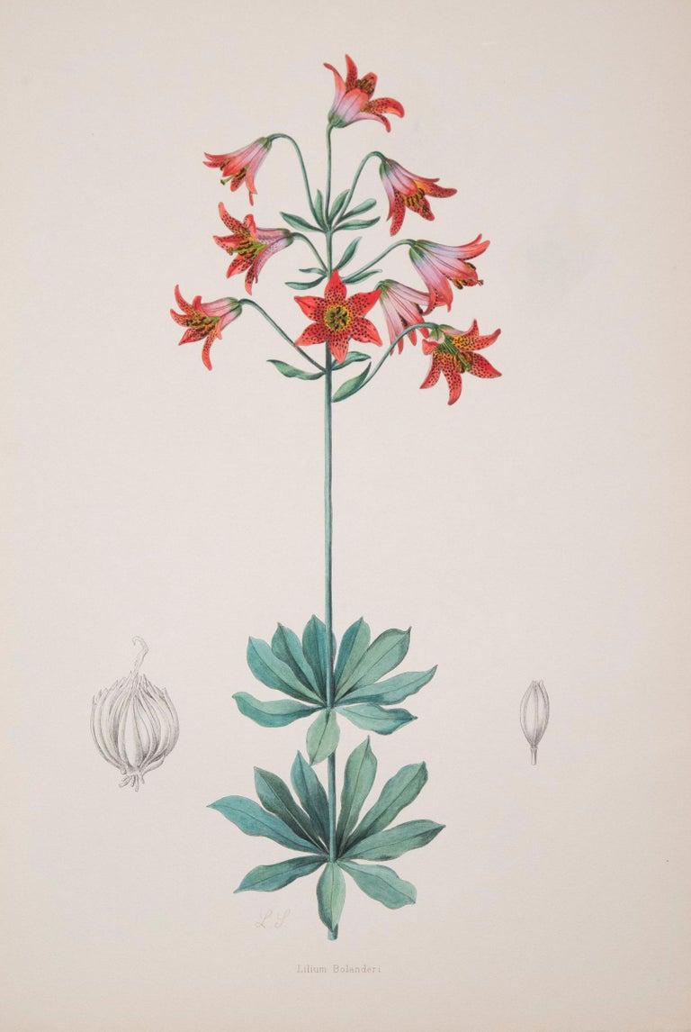 Twelve Large Antique Flower Prints, J.H. Elwes, 1877 For Sale 4