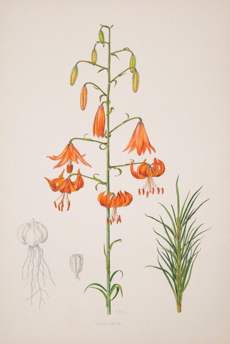 Twelve Large Antique Flower Prints, J.H. Elwes, 1877 For Sale 5
