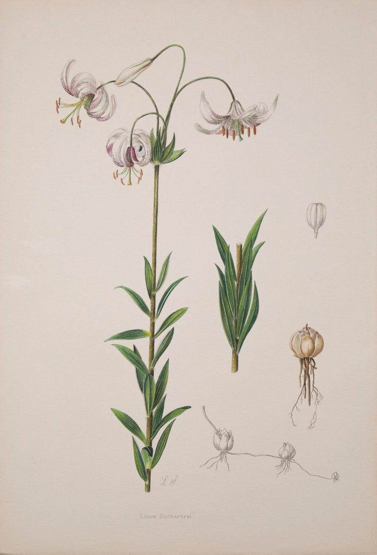 Victorian Twelve Large Antique Flower Prints, J.H. Elwes, 1877 For Sale