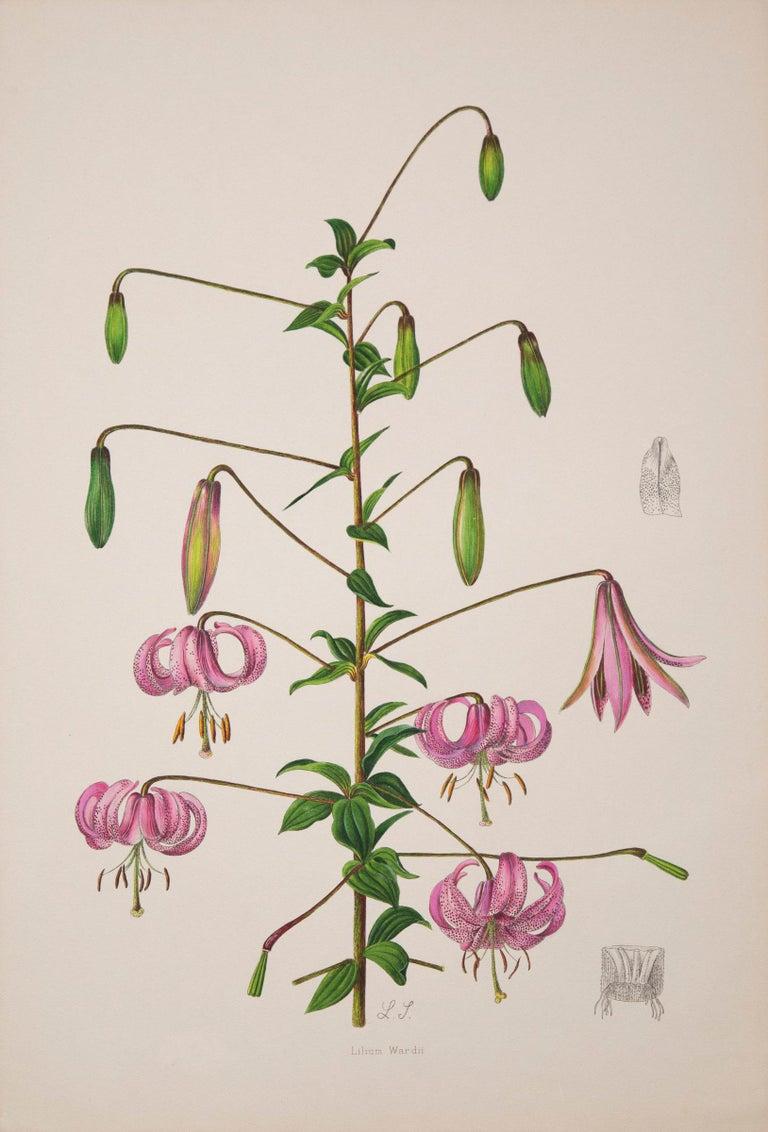 English Twelve Large Antique Flower Prints, J.H. Elwes, 1877 For Sale