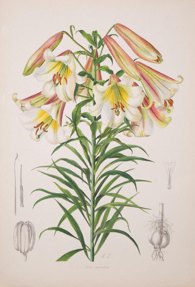 Hand-Painted Twelve Large Antique Flower Prints, J.H. Elwes, 1877 For Sale