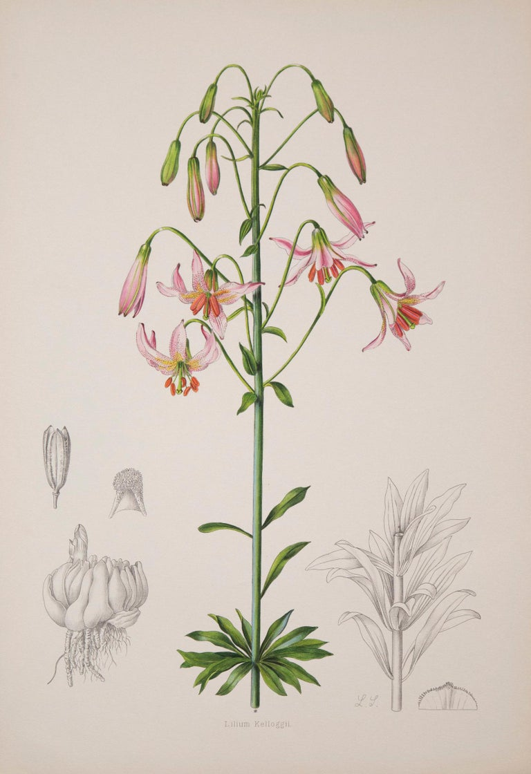 Twelve Large Antique Flower Prints, J.H. Elwes, 1877 In Good Condition For Sale In London, GB