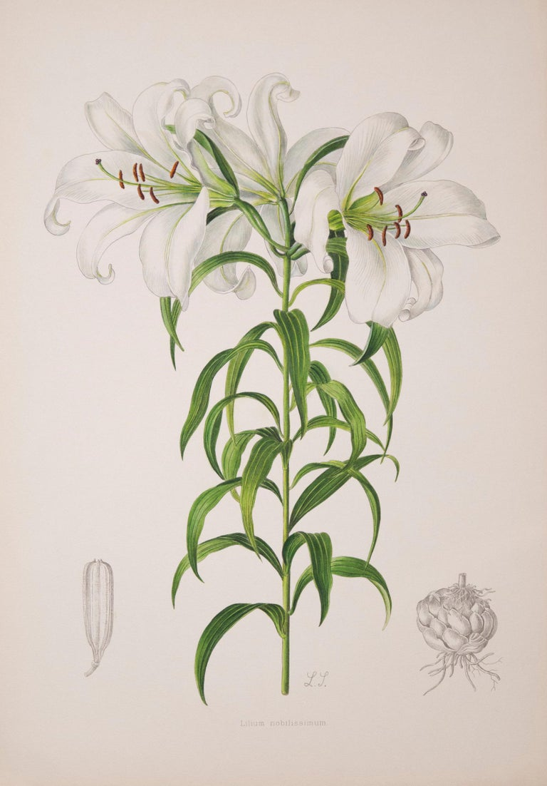 19th Century Twelve Large Antique Flower Prints, J.H. Elwes, 1877 For Sale