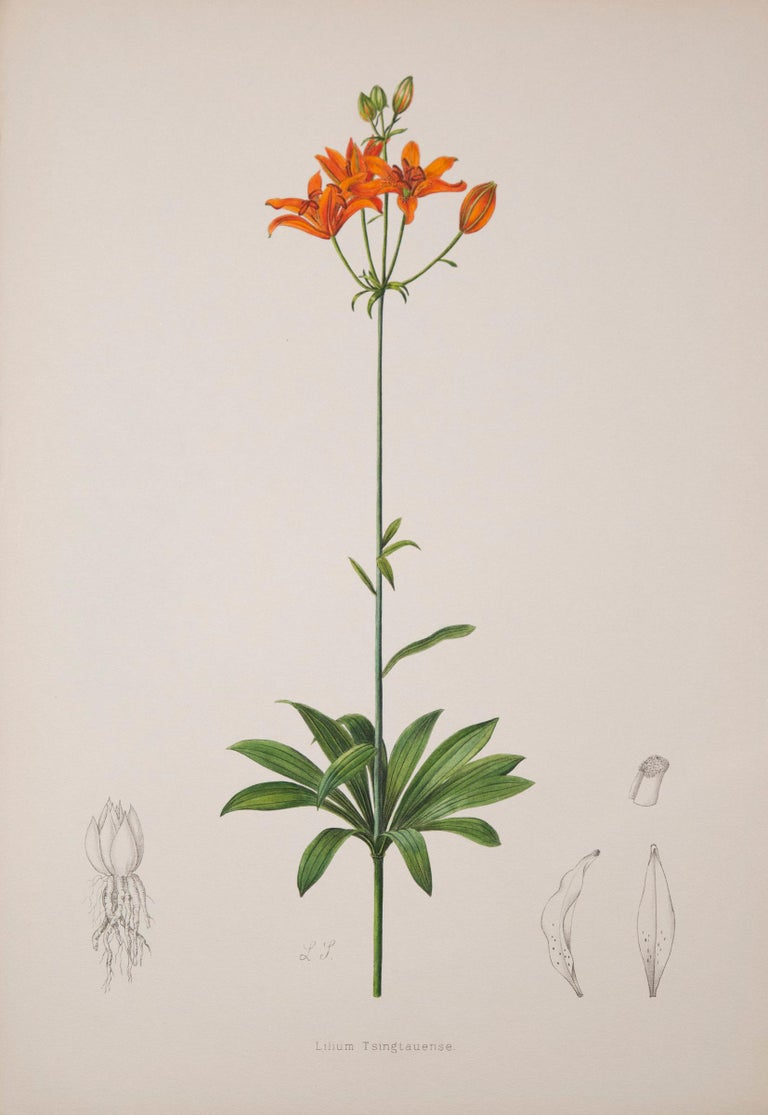 Paper Twelve Large Antique Flower Prints, J.H. Elwes, 1877 For Sale