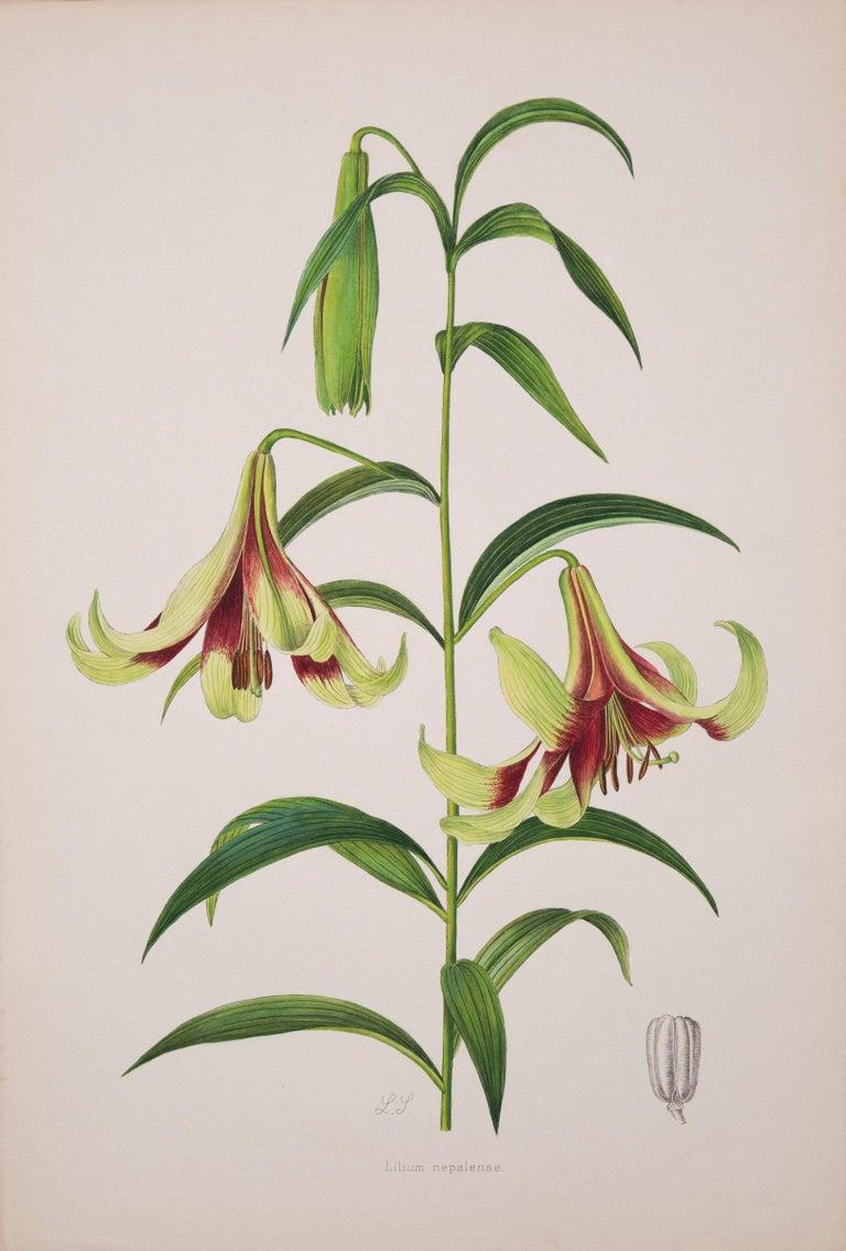 Twelve Large Antique Flower Prints, J.H. Elwes, 1877 For Sale 1