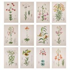 Twelve Large Antique Flower Prints, J.H. Elwes, 1877