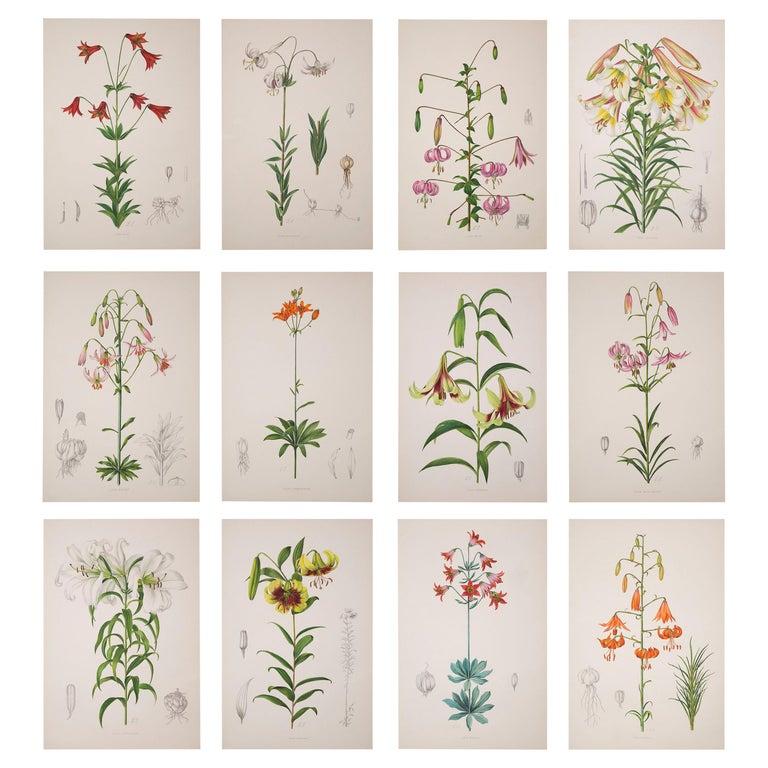 Twelve Large Antique Flower Prints, J.H. Elwes, 1877 For Sale